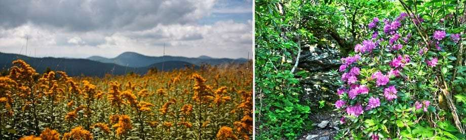 Two photographs, one of orange plants growing in a field, the second of purple flowers near a creek in the forest