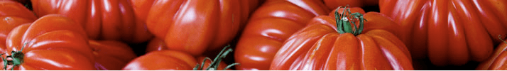 tomatoes, bright and red