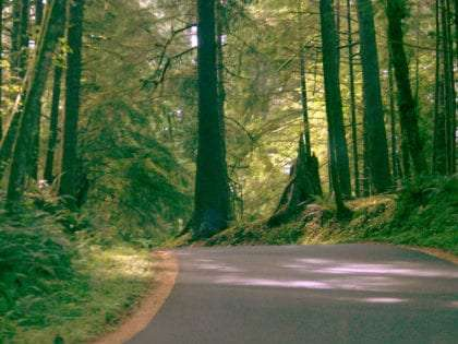 a narrow paved road leading into the dense and lush that is Ecola State Park