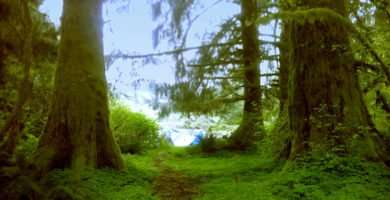 the lush green of the undergrowth of Tillamook State Forest, precisely in the God's Valley area