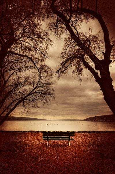 a bench in front of lake Cayuga, autumn and tree covered