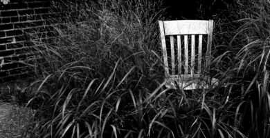 a chair sits in a patch of tall grass