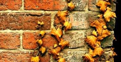 brown leaves cling to a brick wall