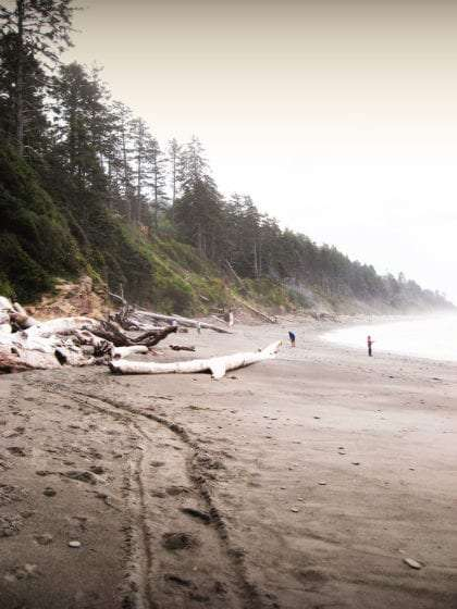 a foggy beach with massive driftwood and forested hills surrounding the pacific ocean