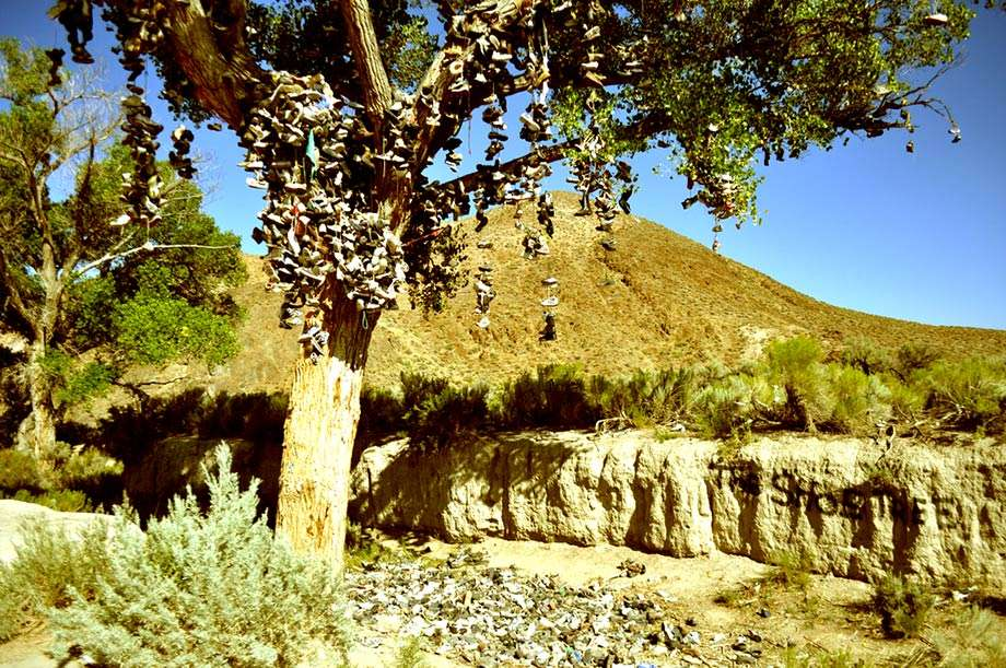 dozens of pairs of shoes hang from a tree in the desert