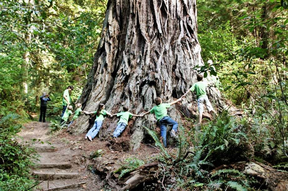 several children locking hands surrounding a redwood tree in a massive bearhug