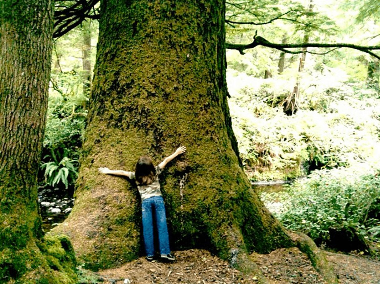 a boy hugs a sitka spruce