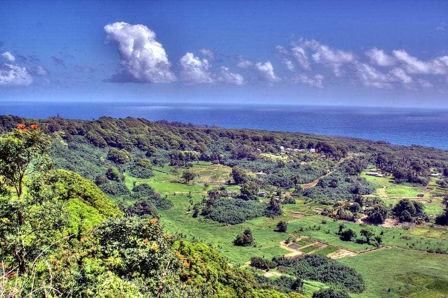 green lush farmland on the coast of Maui