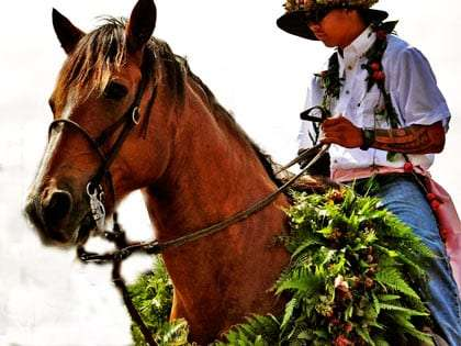 paniolo, similar to a cowboy, with a tattooed arm and sunglasses, sits on a brown horse draped in plants