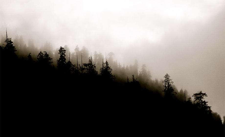 quinault rain forest old growth trees .....doug fir, western hemlock, western red cedar, sitka spruce..