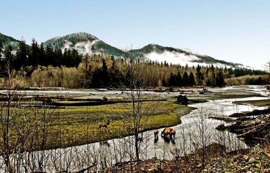 what would appear to be a natural heaven on earth, mountains rise from the smoke of cloudy passings by, elk drink from a creek, life prevails