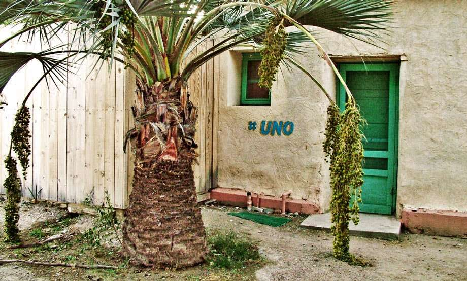 a turquoise door leading into an adobe room at Chinati is masked by a palm tree
