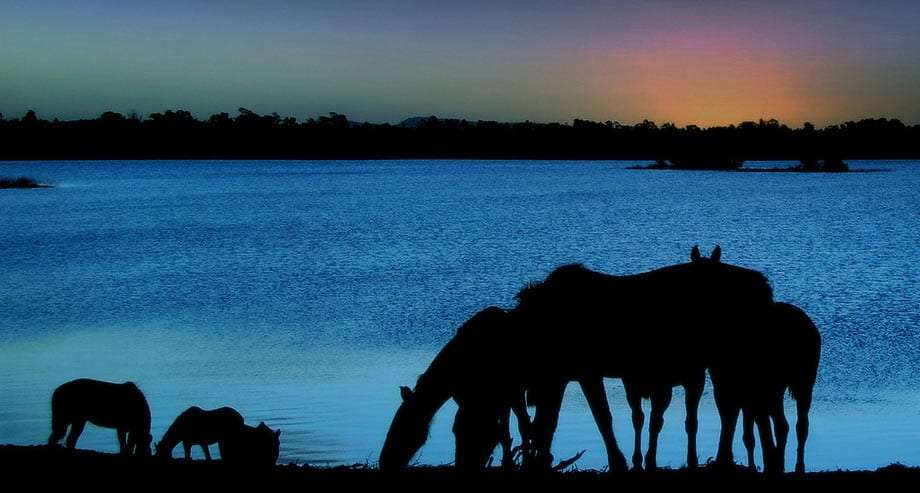 horses graze along the rio grande at sunset
