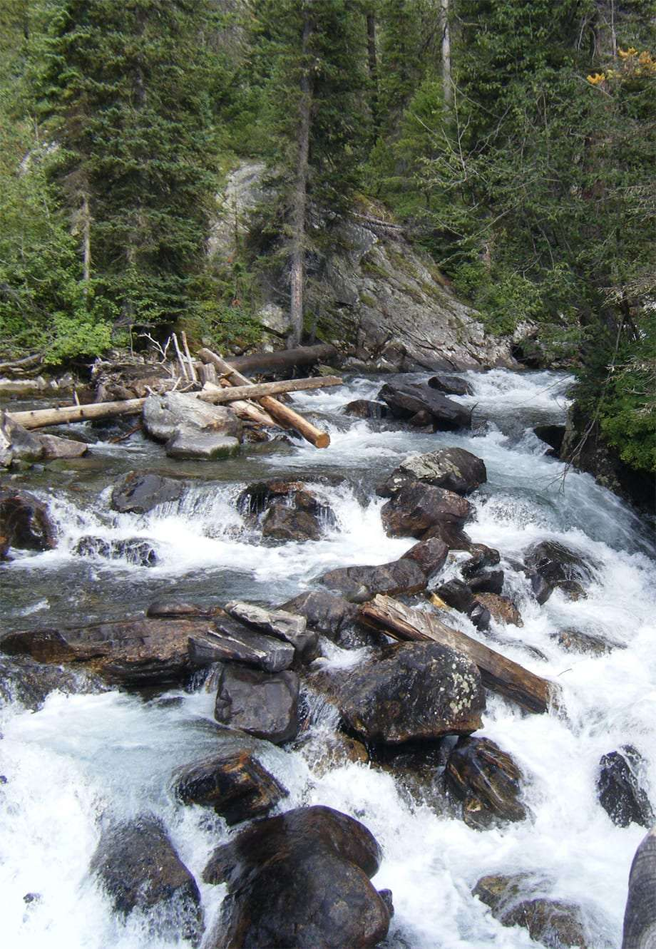 white water breaks, falls and surrounds rocks in a river surrounded by trees and downed logs in Grand Teton National Park