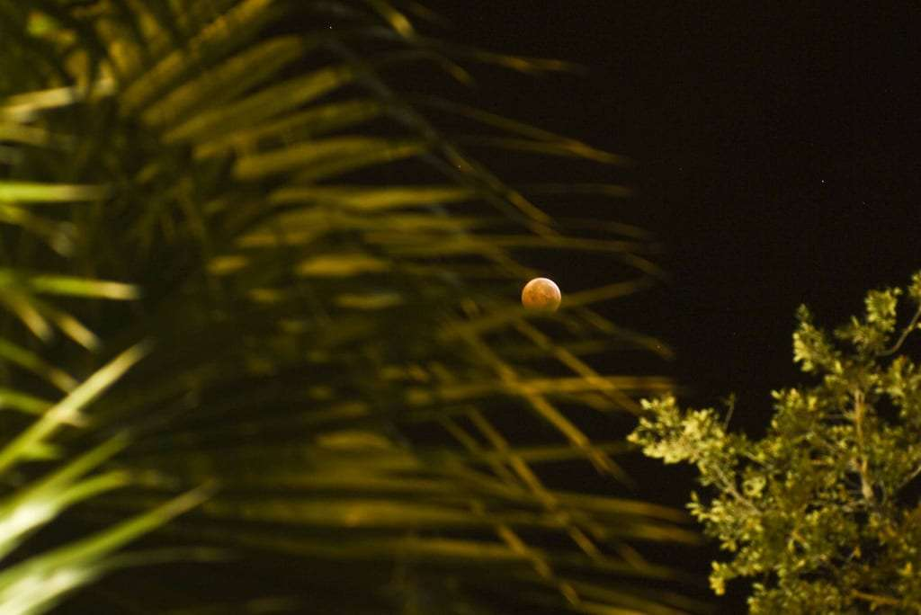 a lunar eclipse goes golden brown between palm trees over Beaufort