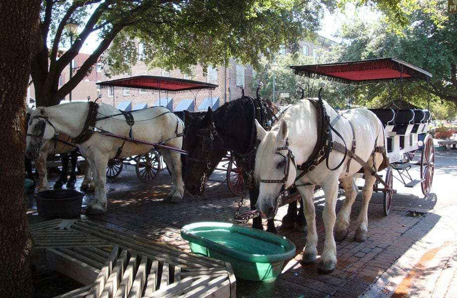 two carriages, drawn by black and white horses, take a break