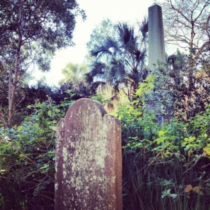 gravestones try to free themselves from overgrown bushes surrounding