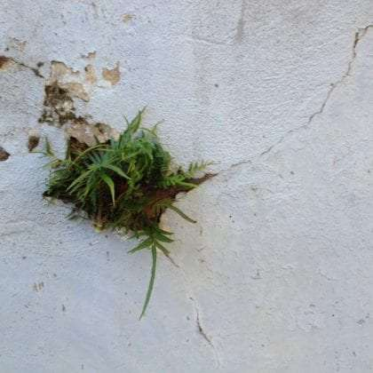 some grass grows in the cracks of a wall