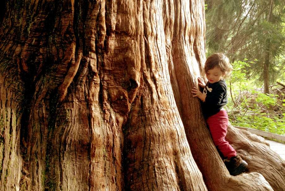 a two year old child stands at the foot of a huge tree