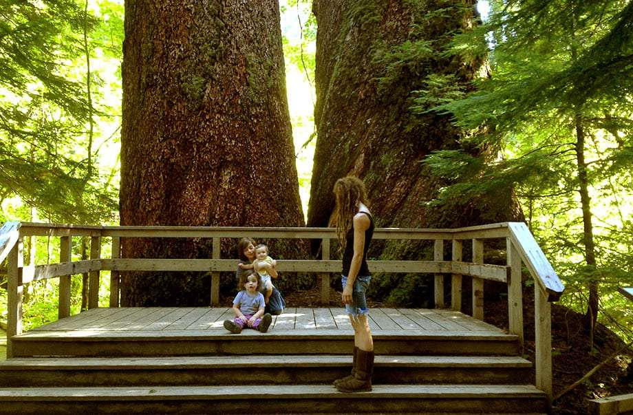 three young boys and their mother sit on a deck beneath two massive redcedars