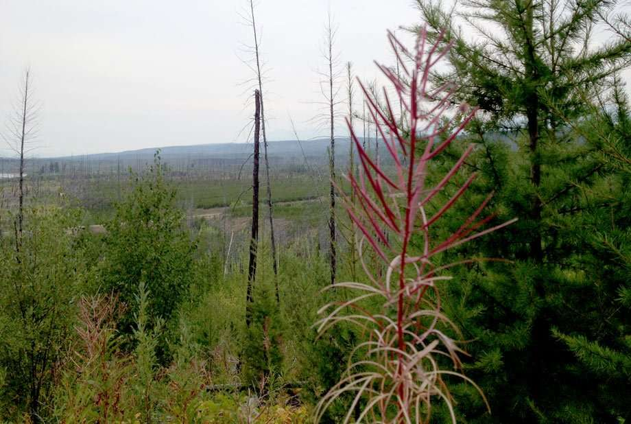 green trees and colorful plants thrive amongst standing burnt trees