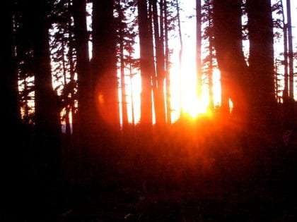 sunset glowing red and yellow through a grove of trees