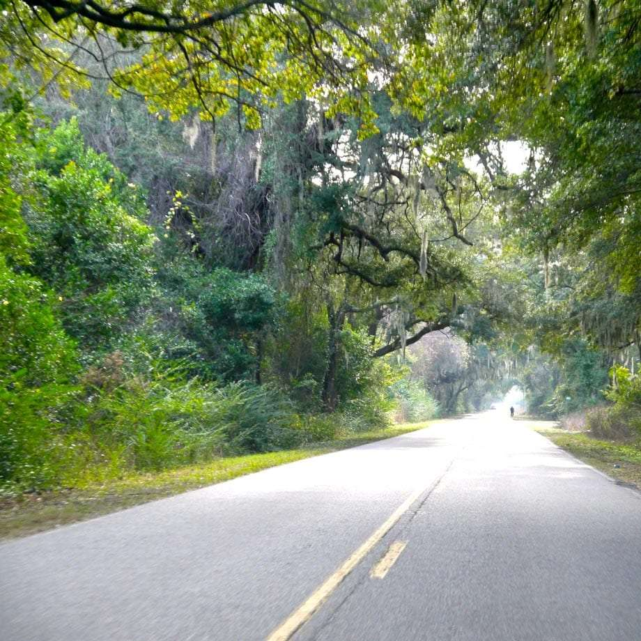a road leading through Spanish moss-lined roads in St. Helena