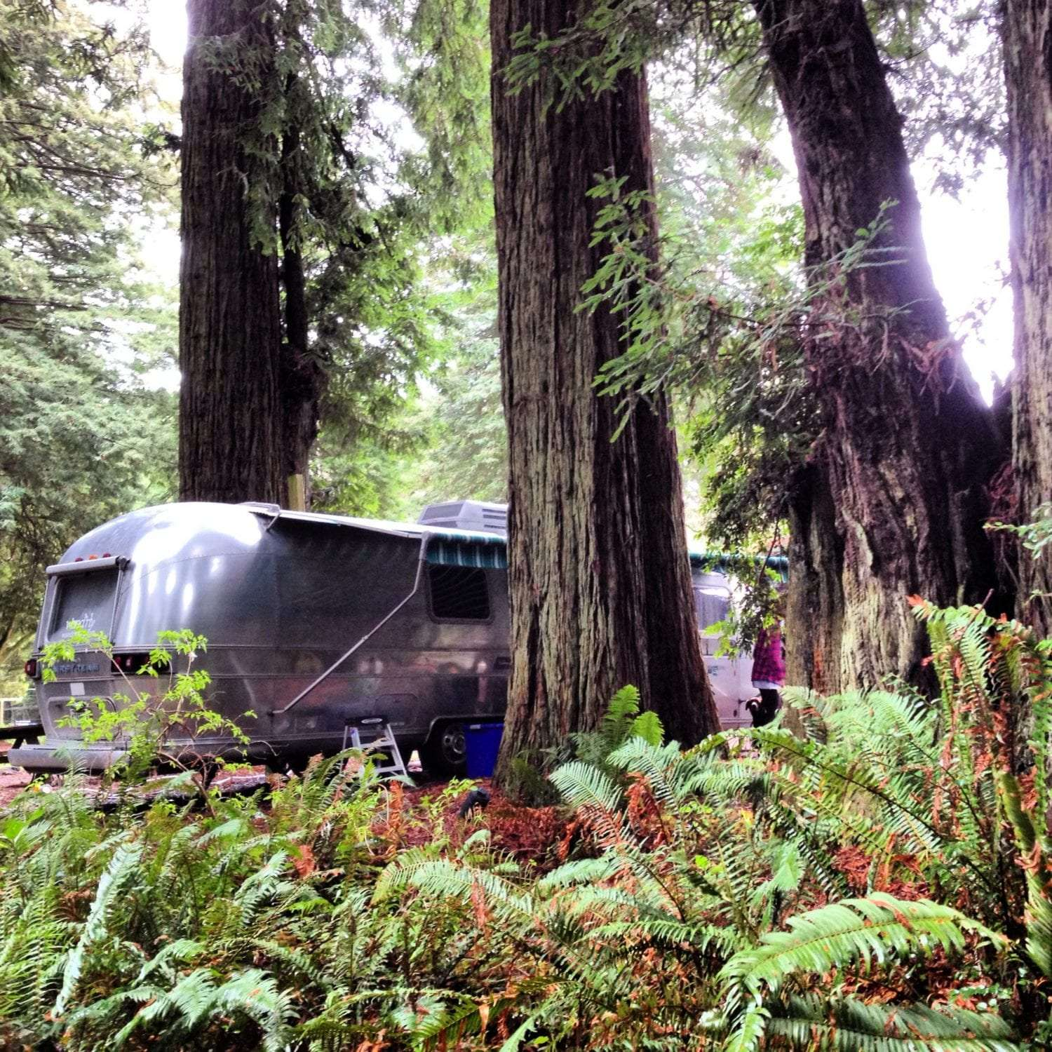 An airstream parked in a grove of redwoods