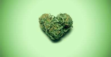 a heart-shaped marijuana bud