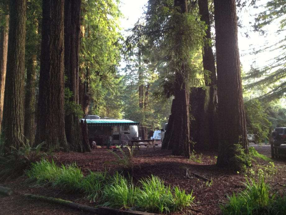 a silver Airstream travel trailer amongst the redwoods