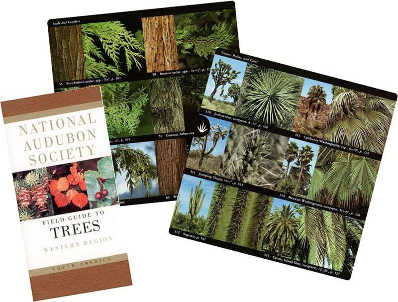 the cover of the book, and two internal pages showing the photos and descriptions of trees