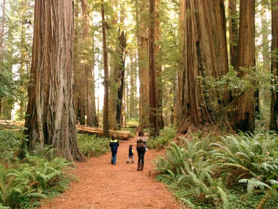 a mother and her three children walk a path through the redwoods