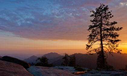 tall pine tree silhouetted against sunset in Sequoia National Park