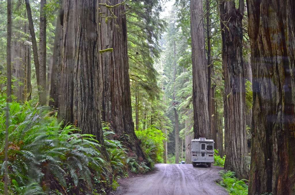 an older RV is dwarfed by the redwoods