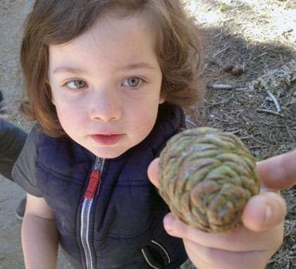 a young boy holds a sequoia cone in his hand