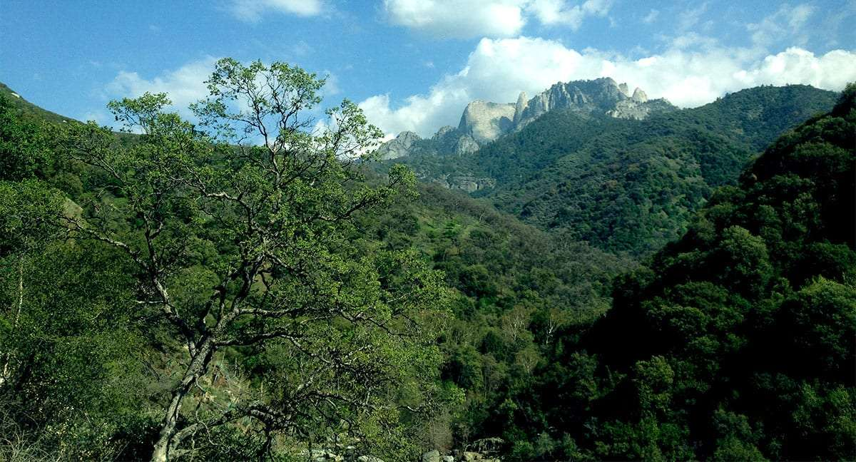 granite mountains rise from a forested hill