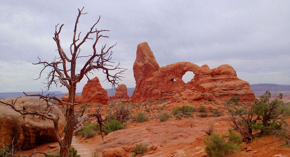 a juniper snag, dead, and the orange beauty of arches national park