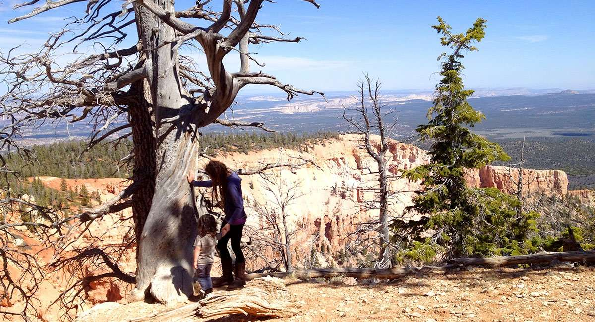 dead-looking trees eek out an existence at the edges of cliffs, 9000 feet in elevation