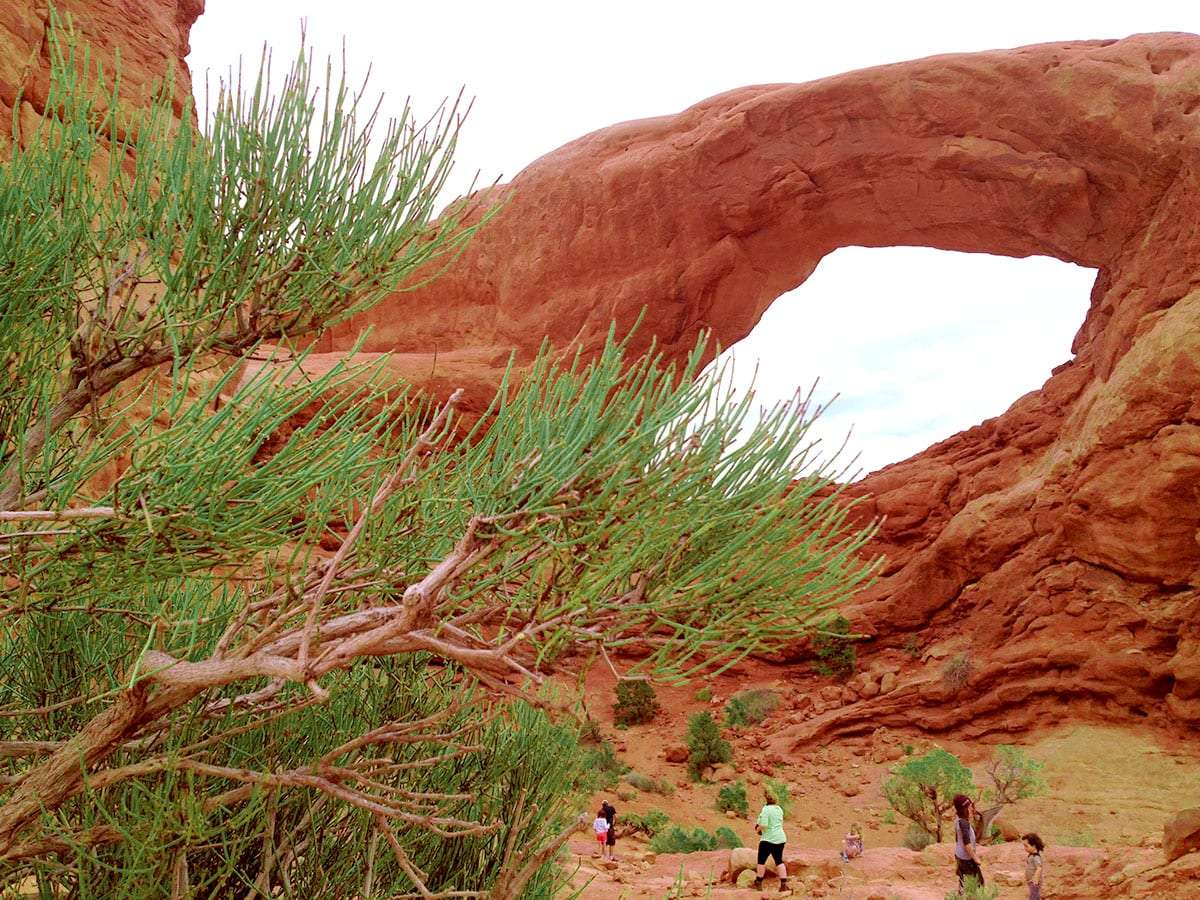 bright green tamarisk branches and a sandstone arch