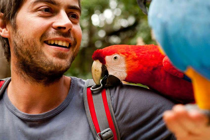 a scruffy cheeked man with a parrot picking from the shoulder strap of his backpack, he looks pleased