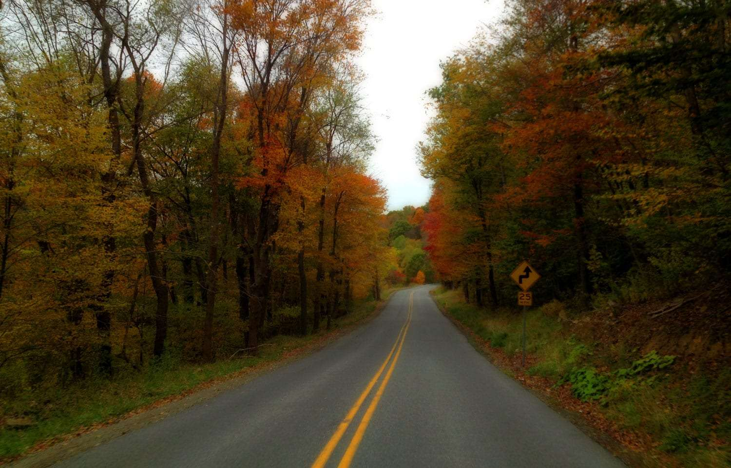 two yellow stripes divide the north and southbound traffic, though rare, of a road through Cambria County, Pennsylvania. Leaves, they are abundant.