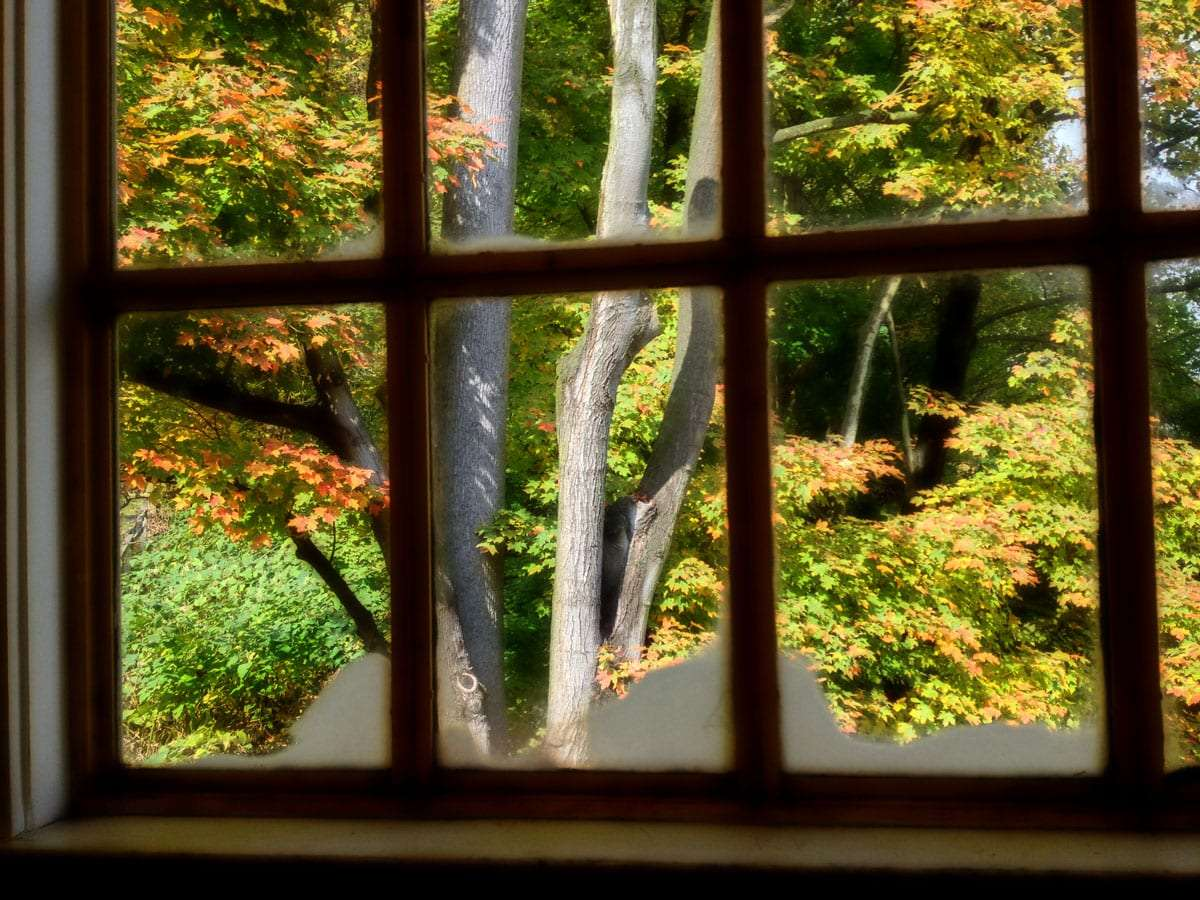 autumn leaves changing through an old paned window