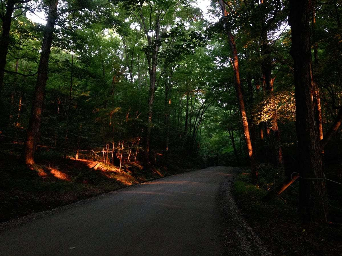 a contrasty road of tree-lined, canopied twistiness