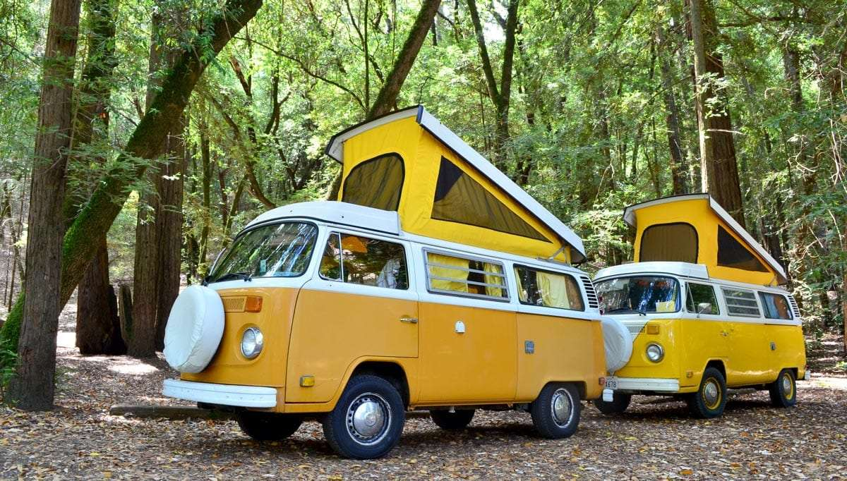 yellow and white volkswagen buses with their pop tops blaring in a green forest