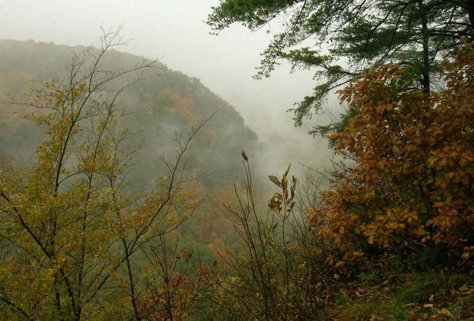 a thick cloud rolls over the mountains and between the trees