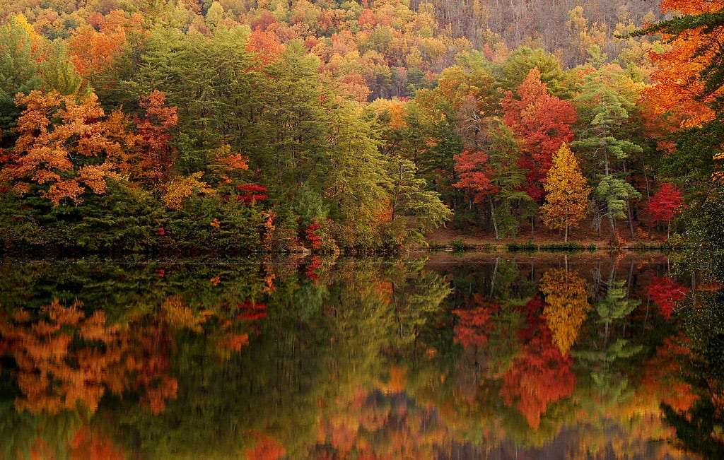 autumn leaves reflecting off of a lake so perfectly it would be impossible to tell the difference if you flipped the photo