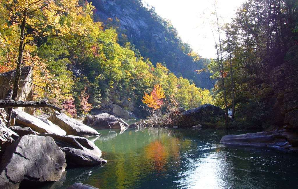 a serene river flows through the bottom of an immense gorge, rocks and trees create swirves in its path
