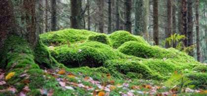 mossy green, a forest is beautiful