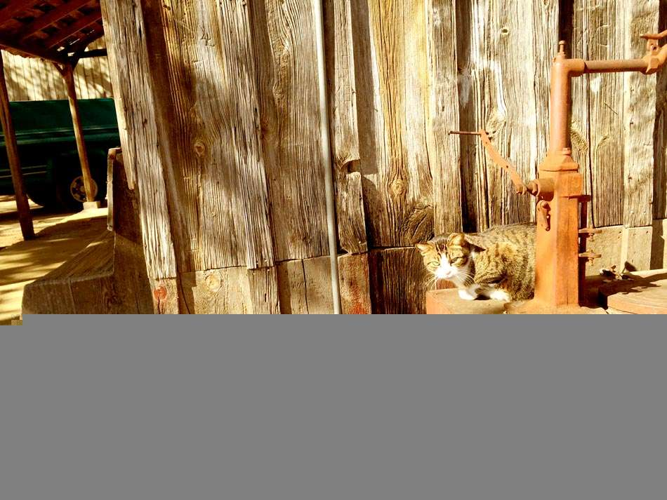 a cat rests on a rusty water pump