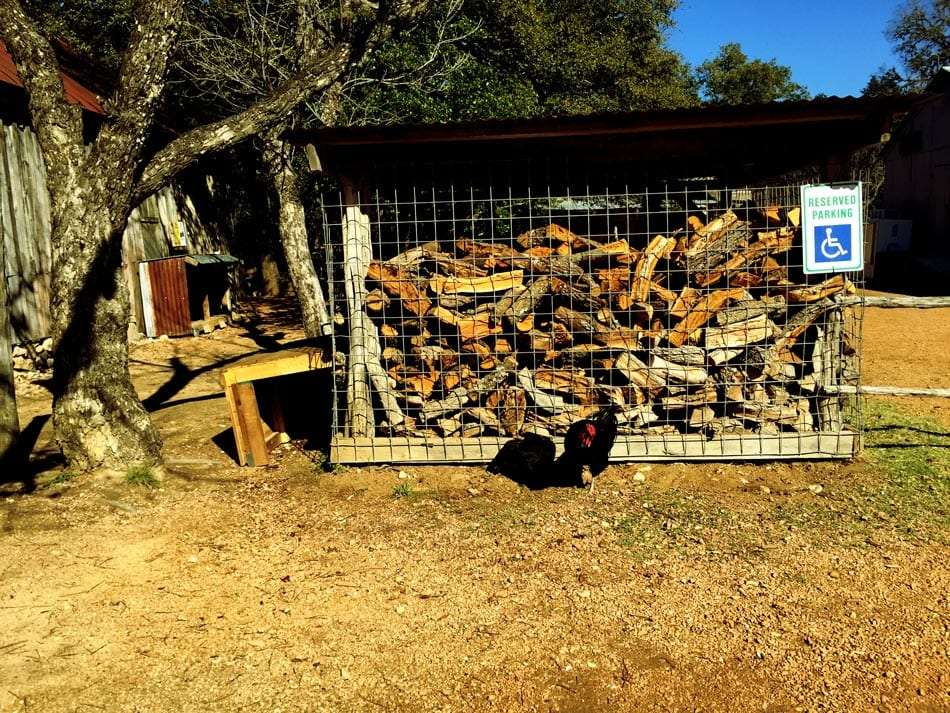 a rooster pecks at the ground in front of a large storage shed full of chopped firewood